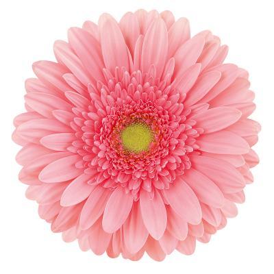 Blossom<sup>®</sup>