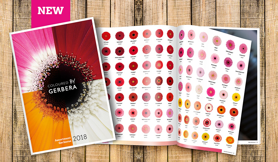 gerbera assortment brochure