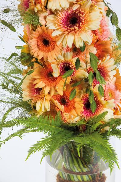 coloured-by-gerbera-summertime-gerberatime-2
