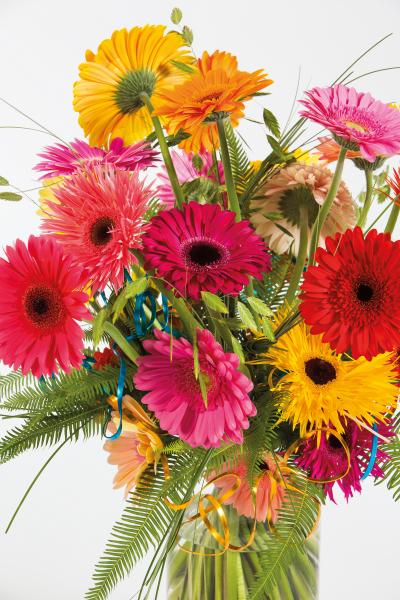 coloured-by-gerbera-summertime-gerberatime-9