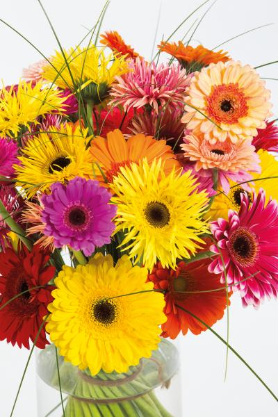 coloured-by-gerbera-summertime-gerberatime-18