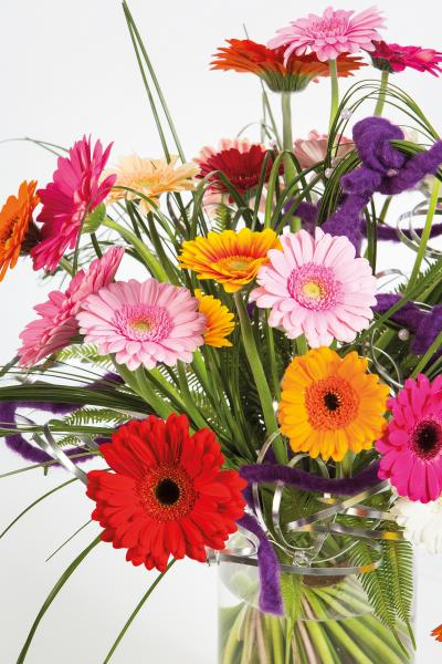 coloured-by-gerbera-summertime-gerberatime-34