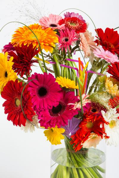 coloured-by-gerbera-summertime-gerberatime-64