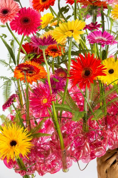 coloured-by-gerbera-summertime-gerberatime-71