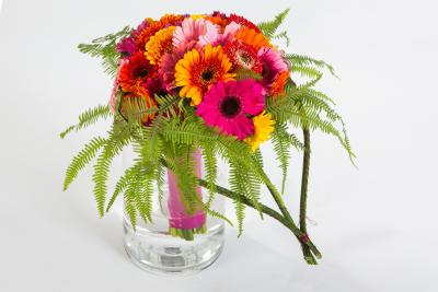 coloured-by-gerbera-summertime-gerberatime-73