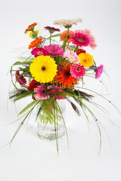 coloured-by-gerbera-summertime-gerberatime-75