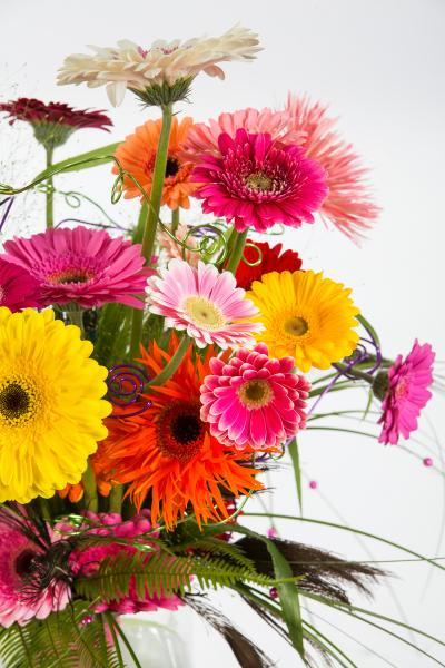 coloured-by-gerbera-summertime-gerberatime-76