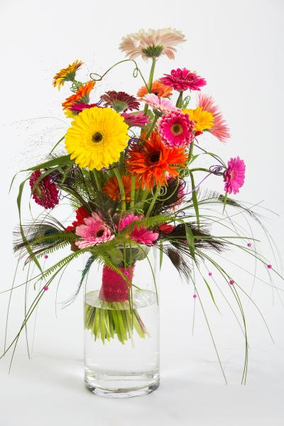 coloured-by-gerbera-summertime-gerberatime-77