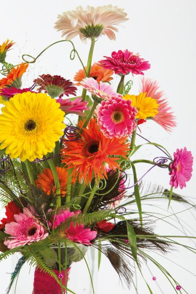coloured-by-gerbera-summertime-gerberatime-78
