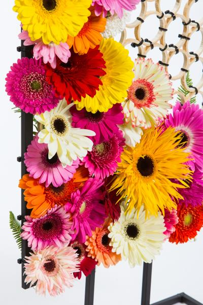 coloured-by-gerbera-summertime-gerberatime-83