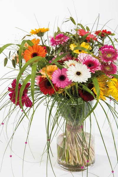 coloured-by-gerbera-summertime-gerberatime-88