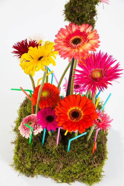 coloured-by-gerbera-summertime-gerberatime-97