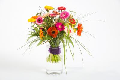 coloured-by-gerbera-summertime-gerberatime-106