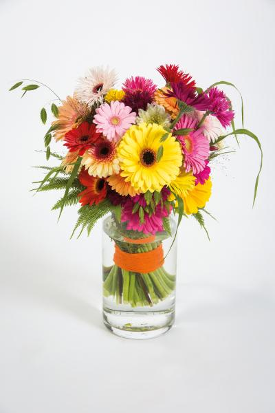 coloured-by-gerbera-summertime-gerberatime-118