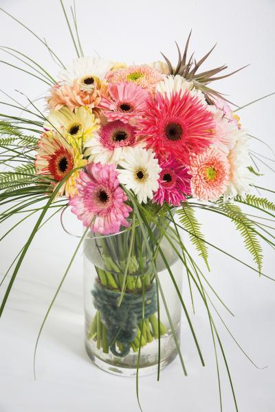 coloured-by-gerbera-summertime-gerberatime-135