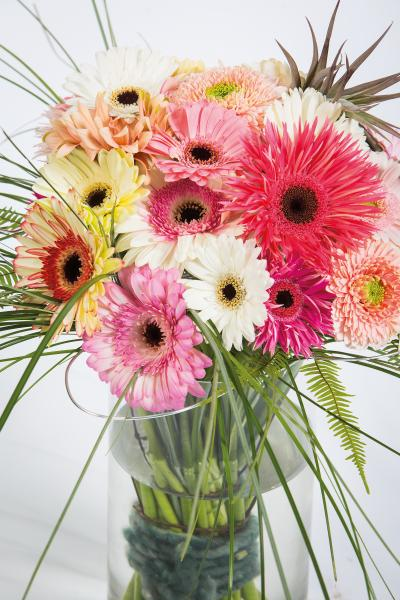 coloured-by-gerbera-summertime-gerberatime-136