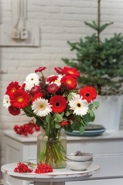 IAP 2dezign gerbera winter 2016-122