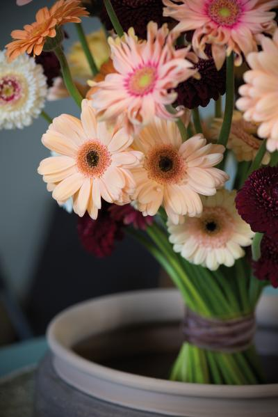 IAP 2dezign gerbera winter 2016-192