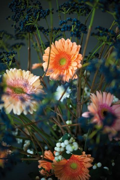 IAP 2dezign gerbera winter 2016-213