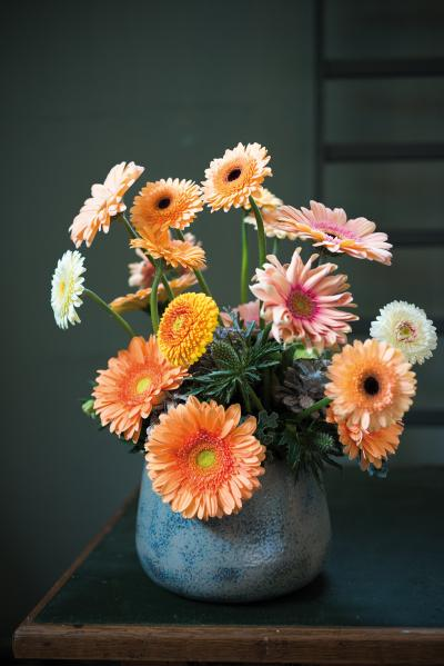IAP 2dezign gerbera winter 2016-241