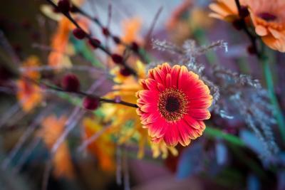 colouredbygerbera-2018-autumn-13