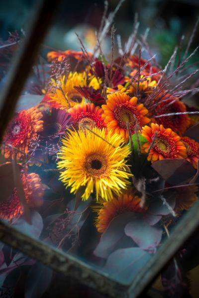 colouredbygerbera-2018-autumn-72
