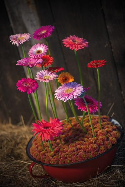 IAP 2dezign gerbera winter 2016-286