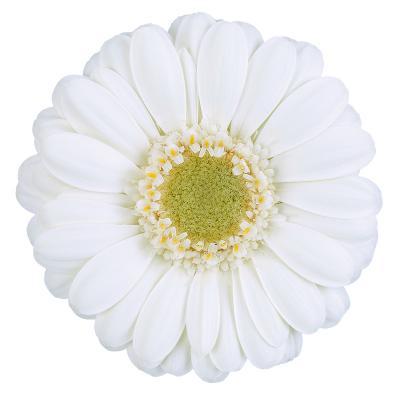 Albino<sup>®</sup>