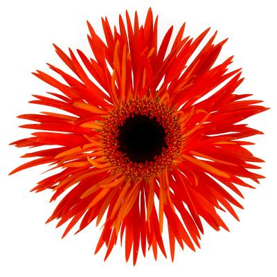 FireworX Hypnotica<sup>®</sup>